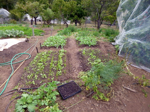 Second intensive vegetable area