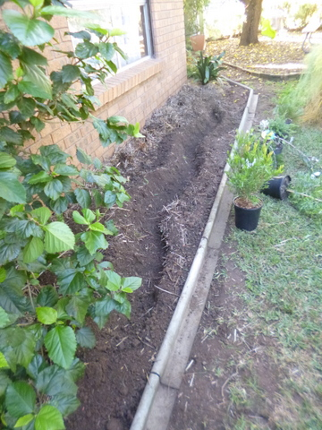 The bed widened and the ditch for buried pipe irrigation dug