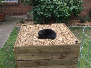 An above ground wicking bed can be made to any size
