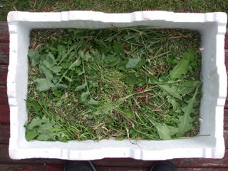 The same box with grass clippings and weeds