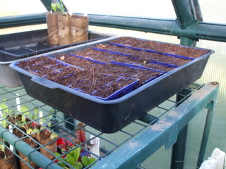 Cat litter tray masquerading as a capillary bed with punnets