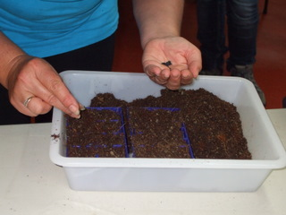 One of the group sowing seeds into the seed raising mix